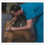 Rights Radio Welcomes the Houston SPCA (Cable TV's Animal Planet – Animal Cops Houston)